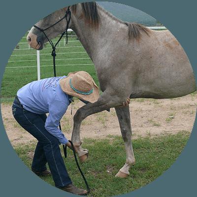 Massage Amp Bodywork Equine Body Balance Queensland
